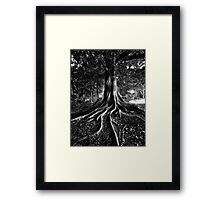 Early Evening In The Garden Of Good And Evil Framed Print