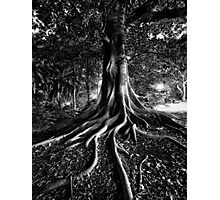 Early Evening In The Garden Of Good And Evil Photographic Print