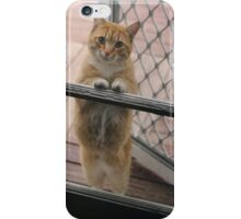 Cat begs to be let in iPhone Case/Skin