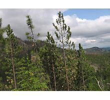 Pine Trees on the Side of a Mountain Photographic Print
