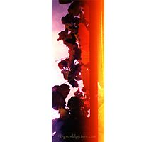 Analogue Leaves Photographic Print