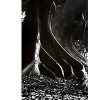 From the Earth...... Photographic Print