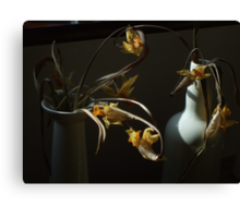 Yet More Dafs  Canvas Print