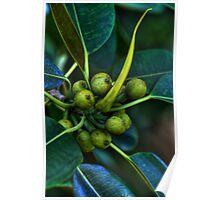 Bearing Fruit.... Poster
