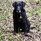 Ebony - My Perfect Lab by Leslie van de Ligt