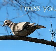 Miss You Dove Card by MoreKeala