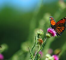 Beautiful Butterfly by Crystal Wightman