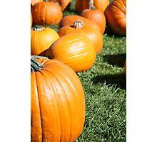 Pumpkins, Pumpkins Everywhere Photographic Print