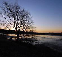 Dawn through the tree by Jim Jankowski