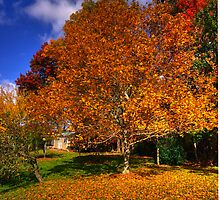 Fall Afternoon in NC by markhail