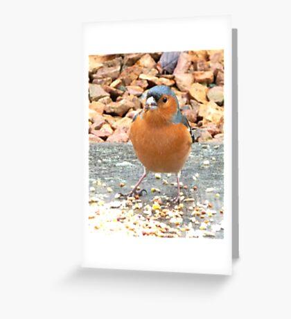 Mr Finch Greeting Card