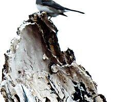 One Little Bird by mezzilicious