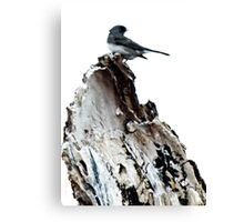 One Little Bird Canvas Print