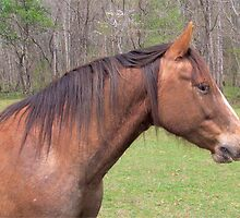 Equine Beauty by Ginny York