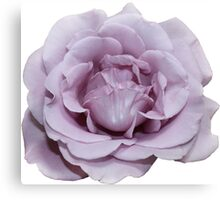 Lilac Garden Rose - Hipster/Pretty/Trendy Flowers Canvas Print