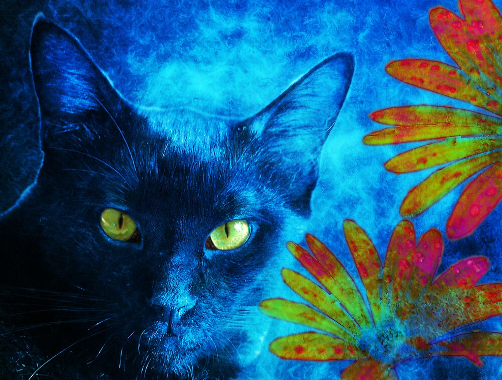 Blue Boris by dimalynn