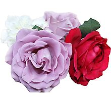 Bouquet of Garden Roses - Hipster/Pretty/Trendy Flowers Photographic Print