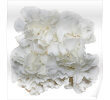 Bouquet of White Carnations Flowers - Hipster/Pretty/Trendy Flowers Poster