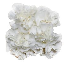 Bouquet of White Carnations Flowers Photographic Print
