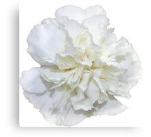 Single White Carnation  Canvas Print