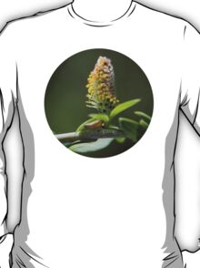 Pussy Willow In Spring T-Shirt