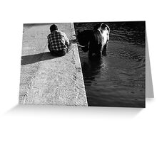 Cooling a horse in the port of Gozo (Malta) Greeting Card