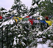 sacred path. mcleod ganj, northern india by tim buckley | bodhiimages