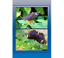 Small Blue Grecian Butterfly collage Photographic Print