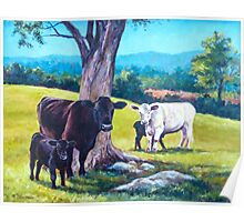 Cows and Calves Poster