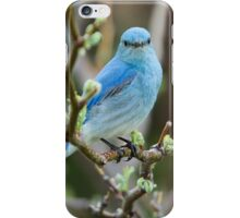 Bluebird Portrait #2 iPhone Case/Skin