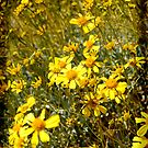 Yellow Desert Wild Flowers by HeavenOnEarth