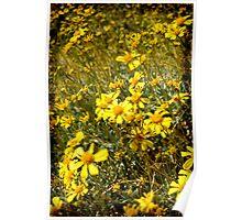 Yellow Desert Wild Flowers Poster