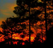Sunset Through the Pines by Lisa Taylor