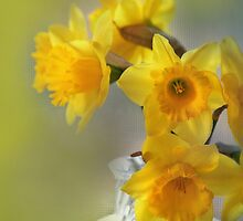 My First Daffodils by Eileen McVey