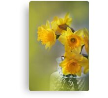 My First Daffodils Canvas Print