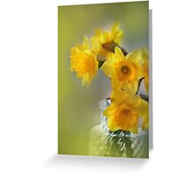 My First Daffodils Greeting Card