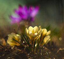 In the morning sunlight by JBlaminsky