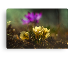 In the morning sunlight Canvas Print