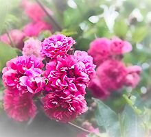 Pink and Perfumed by missmoneypenny