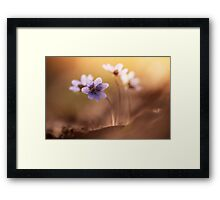 Morning impression with liverworts Framed Print