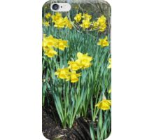 Bed of Daffodils iPhone Case/Skin