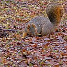 I'm Looking for My Nut by Linda Miller Gesualdo