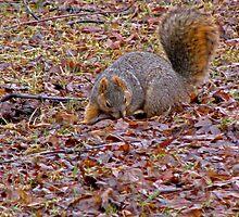 I'm Looking for My Nut by Linda Miller Gesualdo