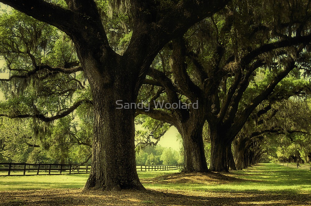 A Stroll To Treasure by Sandy Woolard