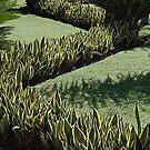 Zigzag by Joanne  Bradley