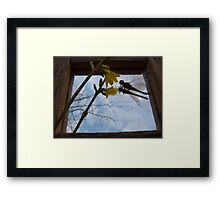 The Dragon Flys Dream Framed Print