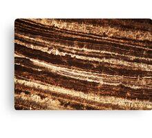 Sinter under the microscope Canvas Print