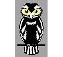 Black and White Owl Photographic Print