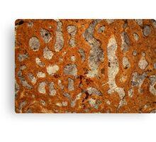 Dinosaur bone under the microscope Canvas Print