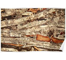 Thin section of fossil calcareous shell fragments  Poster